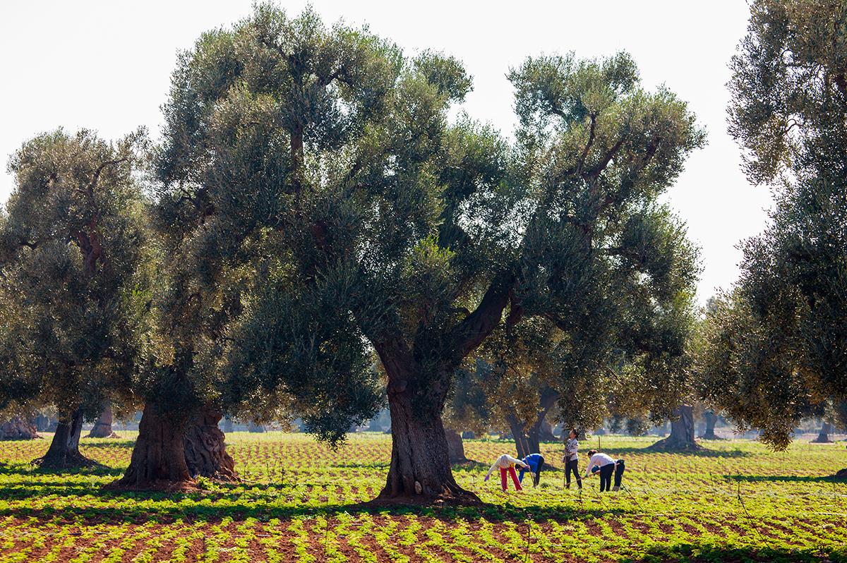 Apulien  -  ein aktiver Genuss