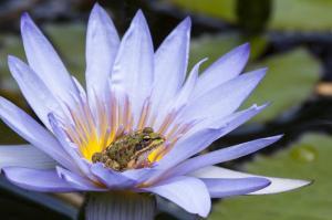 Azoren: Liaison mit der Natur individuell