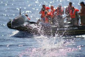 Azoren: Pico - Delfine & Wale intensiv