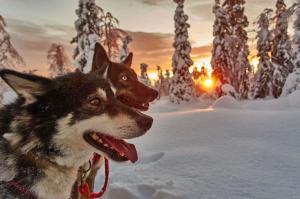 Finnland | Lappland - Husky-Wintertraum: Klassisch (Sa. – Sa.)