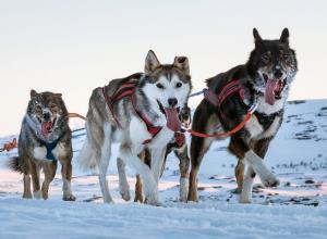 Finnland | Lappland - Husky-Wintertraum: Sportlich (Mi – Mi)