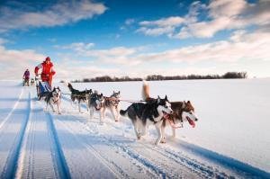 Finnland: Husky- und Winterabenteuer