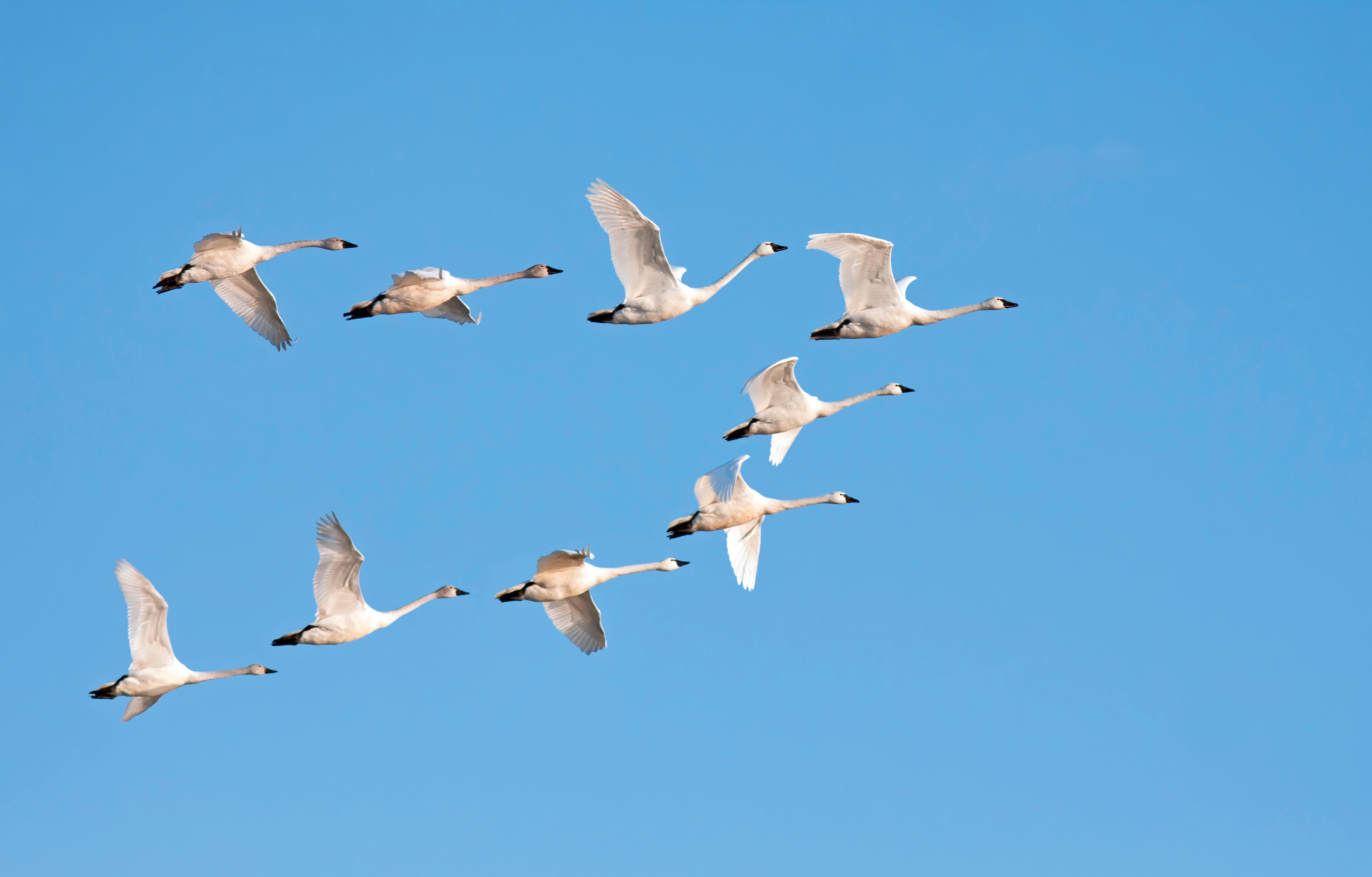 Fischland - Darß - Zingst: Aktivurlaub