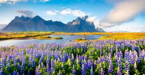Island: Die ausführliche Reise