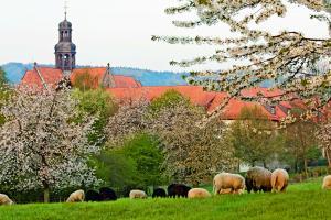 Kloster Marienrode: Achtsamkeit & Meditation