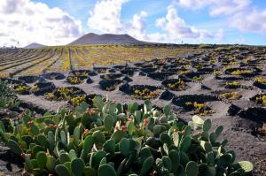 Lanzarote - Trekking über die Feuerinsel