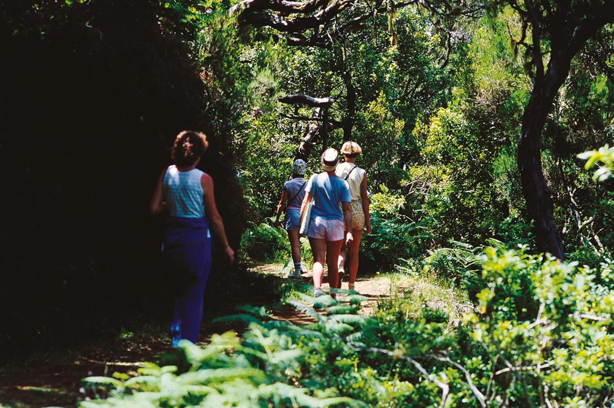 Madeira -  Levadas, Lorbeer, Lavafelsen