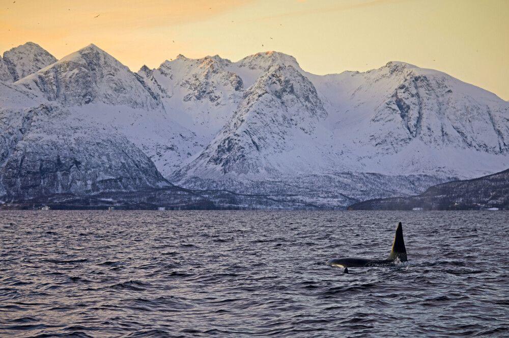 Norwegen - Segeln, Nordlichter und Wale