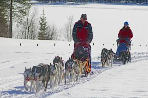 Schweden - Husky-Erlebniswoche in Lappland